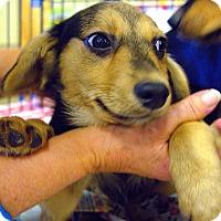 Adopt A Pet :: Linus - Pittstown, NJ