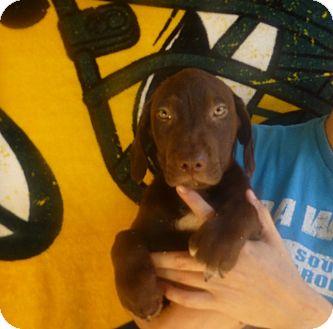 Golden Retriever/Labrador Retriever Mix Puppy for adoption in Oviedo, Florida - Rex