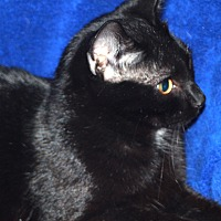 Adopt A Pet :: Jesse - Laingsburg, MI
