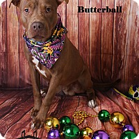 Adopt A Pet :: Butterball - Luling, LA