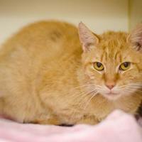 Adopt A Pet :: Locket - Arlington, VA