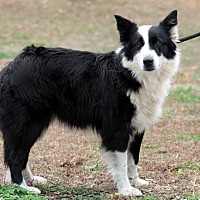 Adopt A Pet :: Misty - Charleston, SC