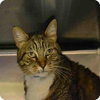 Adopt A Pet :: ROBIN HOOD - Rancho Cucamonga, CA