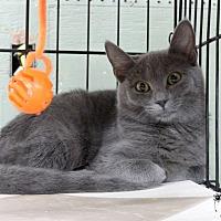 Adopt A Pet :: Kimber - Marlinton, WV