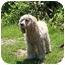 Photo 3 - Cocker Spaniel Dog for adoption in Overland Park, Kansas - Amanda