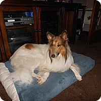 Adopt A Pet :: Arye - Minneapolis, MN