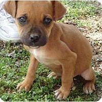 Adopt A Pet :: Juno - Allentown, PA