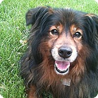 Adopt A Pet :: Anna - Hilliard, OH
