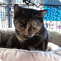 Adopt A Pet :: Fall - West Dundee, IL