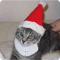 Adopt A Pet :: Liam - Catasauqua, PA