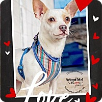 Adopt A Pet :: Rose - Shawnee Mission, KS
