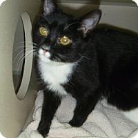 Adopt A Pet :: Rocky - Hamburg, NY