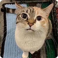 Adopt A Pet :: Crystal - Sacramento, CA