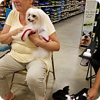 Adopt A Pet :: Paris - Fort Myers, FL