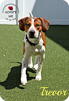 Hound (Unknown Type) Mix Dog for adoption in Youngwood, Pennsylvania - Trevor