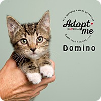 Adopt A Pet :: Domino - Friendswood, TX