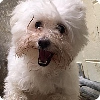 Adopt A Pet :: Icy, Winston - Ocala, FL