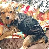 Adopt A Pet :: Ollie - Coldwater, MI
