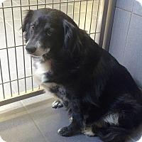 Adopt A Pet :: Katie - Jackson, MI