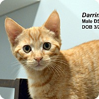Adopt A Pet :: Darrin - Lincoln, NE