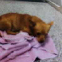 Adopt A Pet :: Zach - Arlington, VA