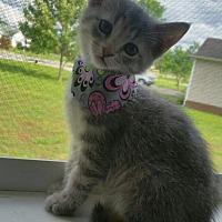 Adopt A Pet :: Stormie - Huntsville, AL