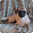 Adopt A Pet :: Lil Bit