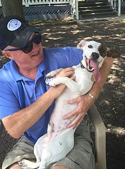Jack Russell Terrier/Dachshund Mix Dog for adoption in Arlington, Texas - SAM