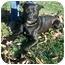 Photo 3 - Labrador Retriever Mix Dog for adoption in Greensburg, Pennsylvania - Sammy