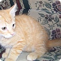 Adopt A Pet :: Dagon - Gray, TN