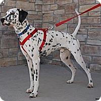 Adopt A Pet :: Odie - Newcastle, OK