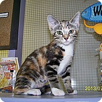 Adopt A Pet :: Lata - Dover, OH