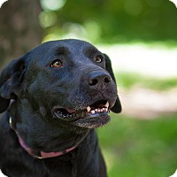 Adopt A Pet :: Carly - Lewisville, IN