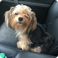 Adopt A Pet :: Fiona aka FiFi - Hazard, KY
