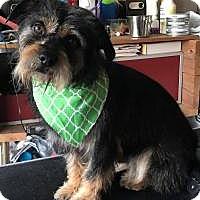 Adopt A Pet :: Rocky - Irmo, SC