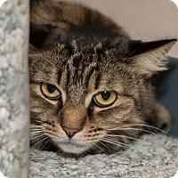 Adopt A Pet :: Maggie - Fountain Hills, AZ