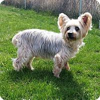 Adopt A Pet :: KRAMER - Port Clinton, OH