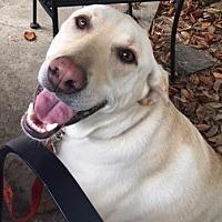 Adopt A Pet :: Gimli - Little Rock, AR