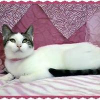 Adopt A Pet :: Amira - Erie, PA