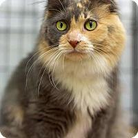 Adopt A Pet :: Talula Rose - Troy, MI