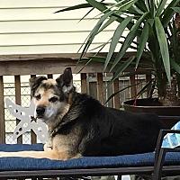 Adopt A Pet :: Smokey - Groton, CT
