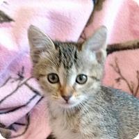 Adopt A Pet :: Arizona - Des Moines, IA