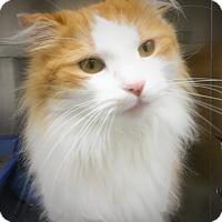 Adopt A Pet :: Wolf - Webster, MA