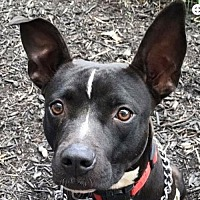 Adopt A Pet :: Princess *Adopt or Foster* - Fairfax, VA