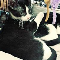 Adopt A Pet :: Dodger - Yorba Linda, CA