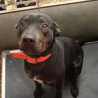 Adopt A Pet :: Gotham - Fort Madison, IA