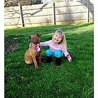Adopt A Pet :: Strawberry - Southampton, PA