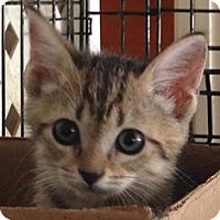 Adopt A Pet :: Jesse - Port Republic, MD