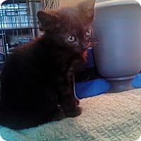 Adopt A Pet :: Berry - Brooklyn, NY