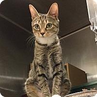 Adopt A Pet :: Sweetie - Colmar, PA